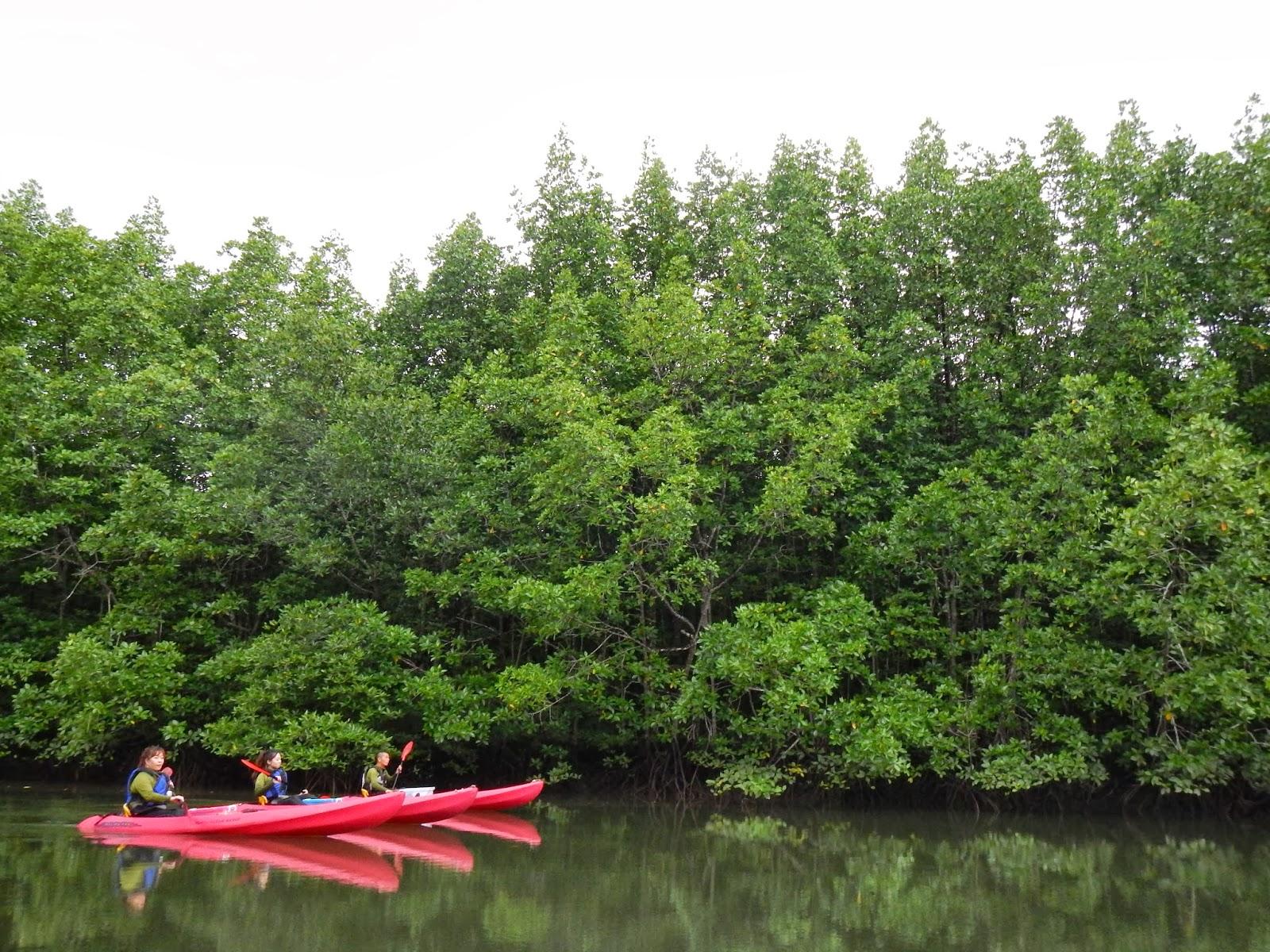 バリ島ランカウイ島マングローブ
