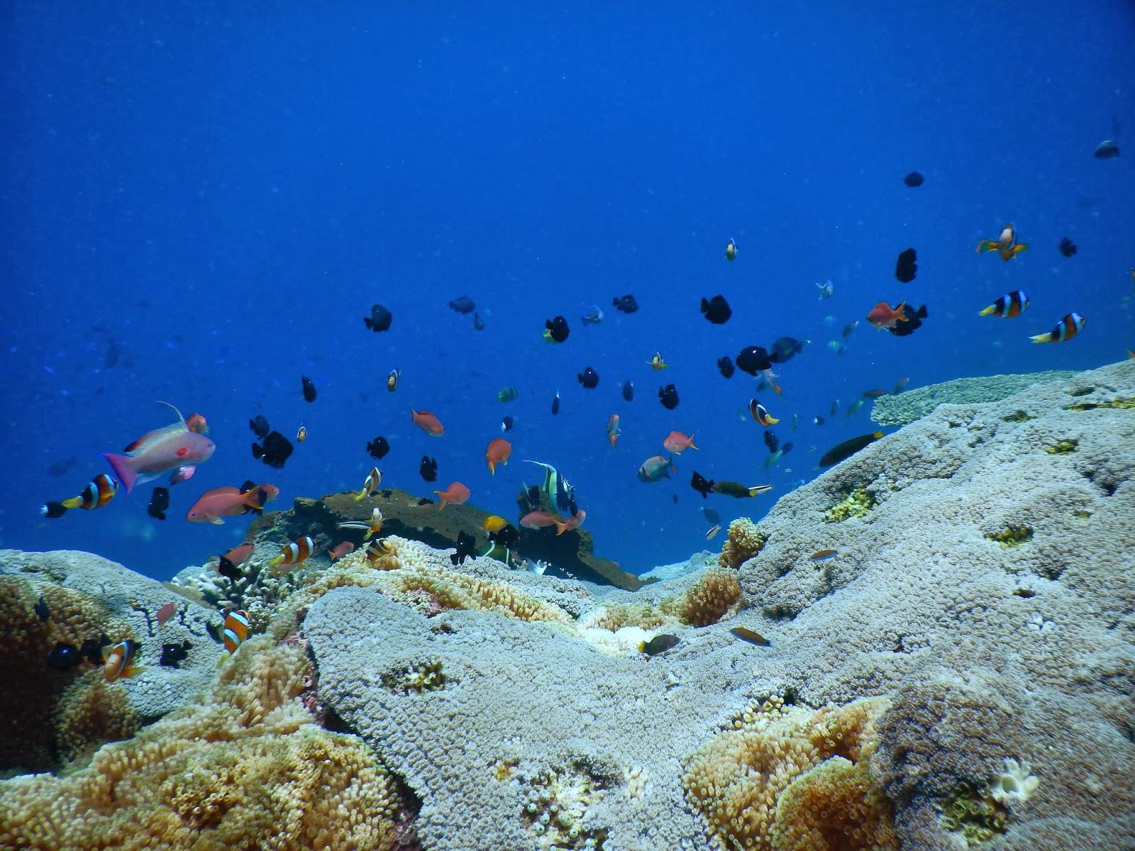 レンボンガン島・サンゴ礁と魚の海中写真集