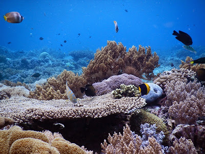 レンボンガン島のサンゴ礁