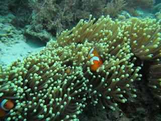 バリ島、ムンジャンガン、ダイビング