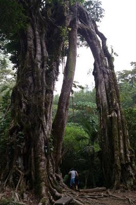 バリ島の植物園