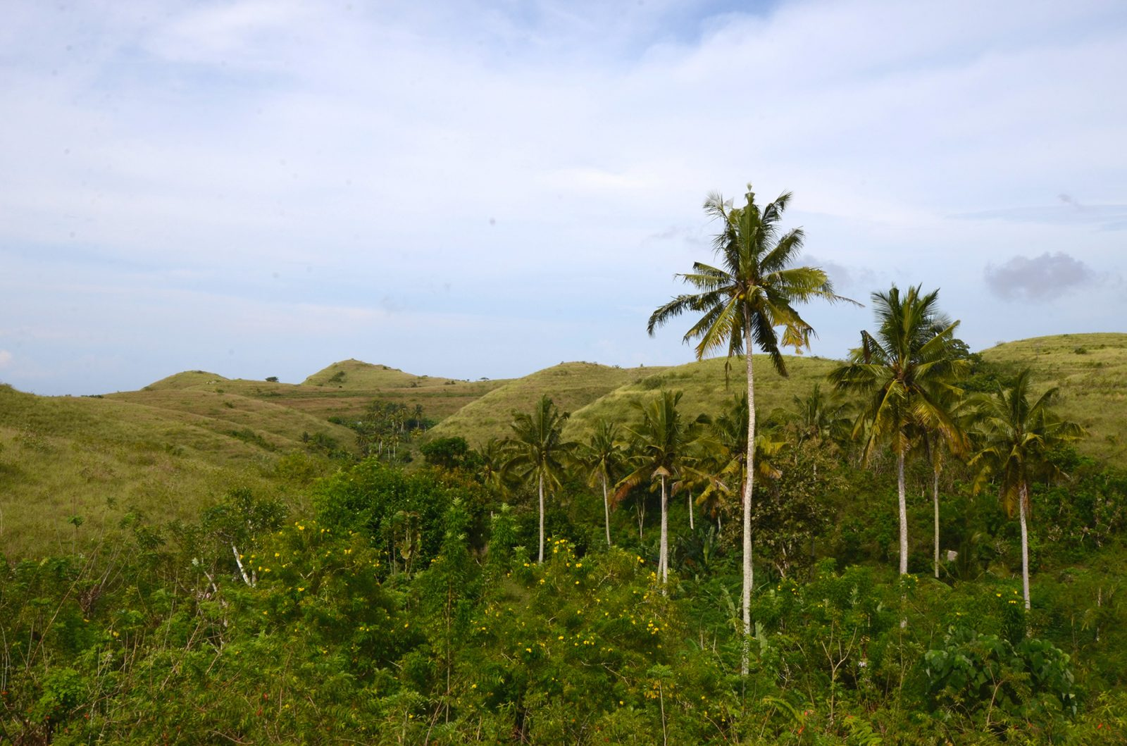 ペニダ島の自然