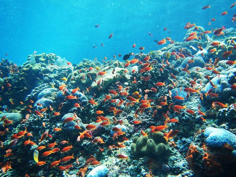 レンボンガン島サーフトリップの行き方とポイント紹介