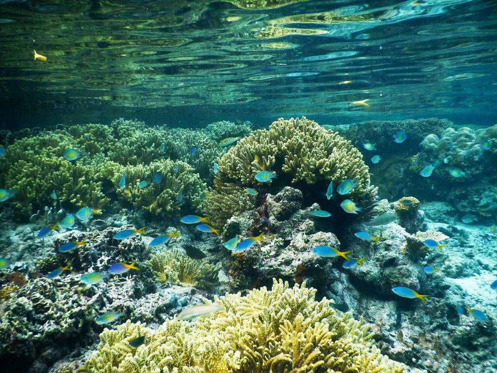 パプア州のラジャアンパットのサンゴ礁