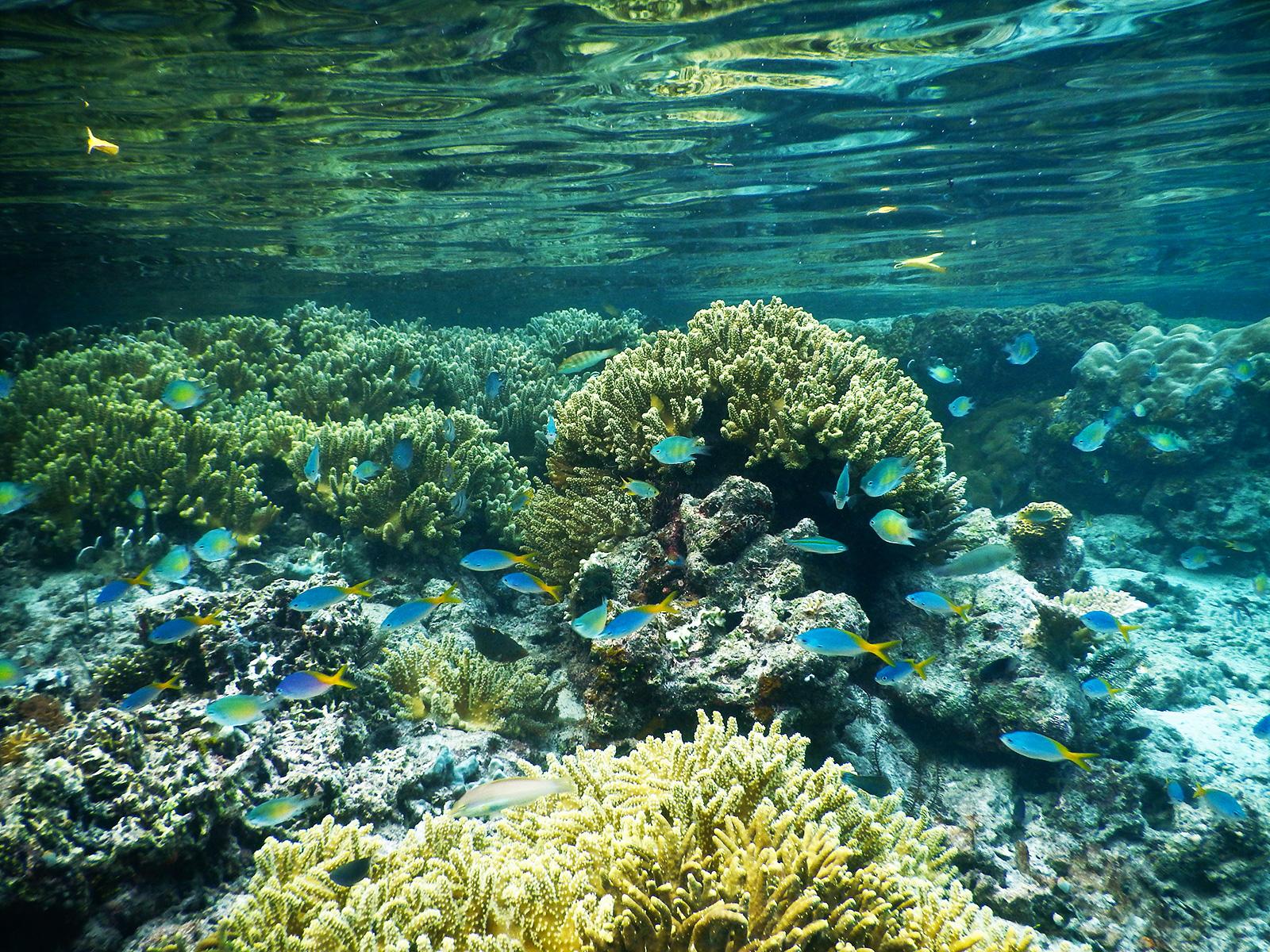 explore-rajaampat-snorkeling
