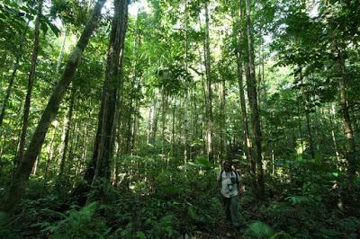 ウォーレシアの森