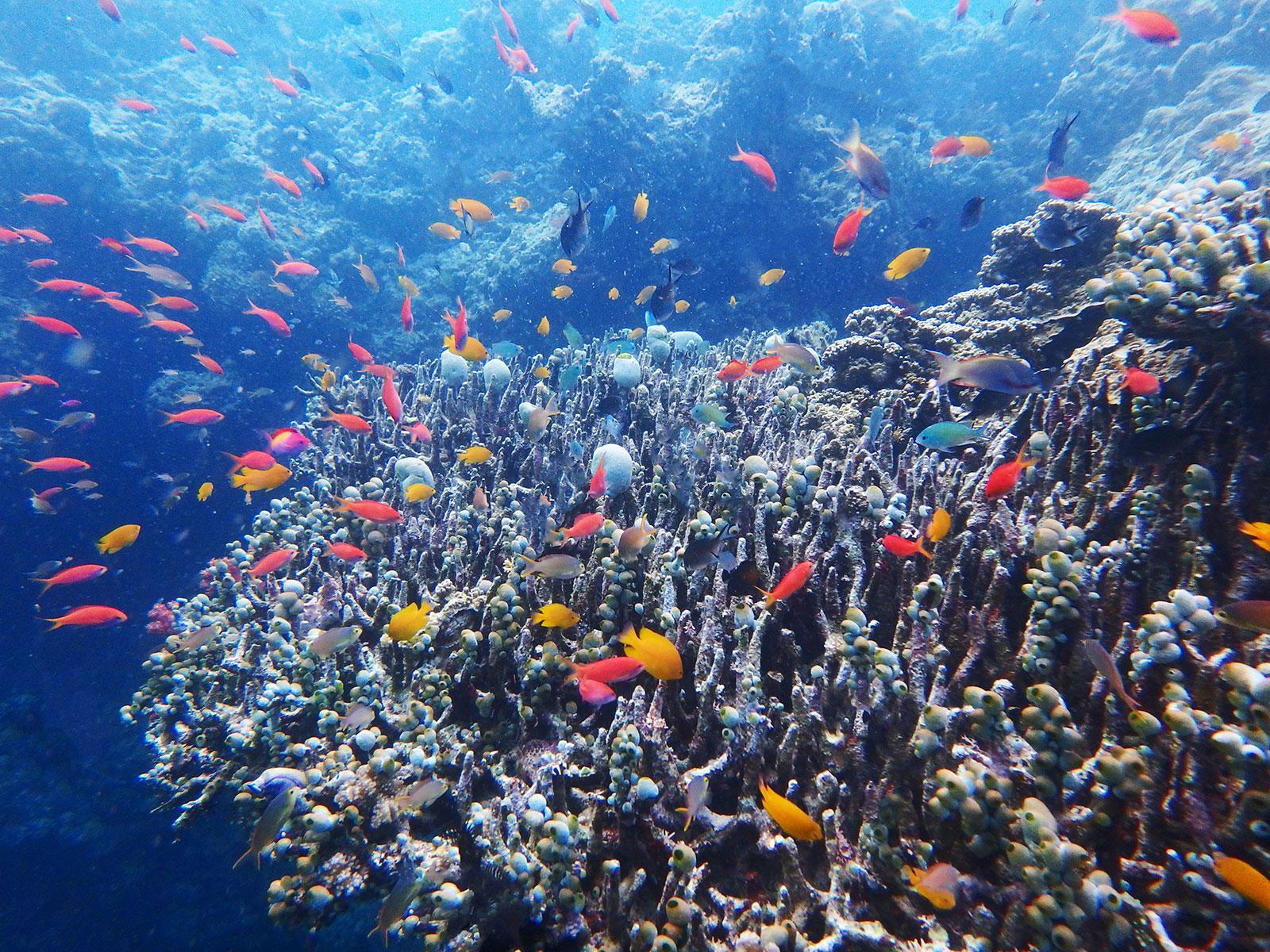 menjangan-snorkeling