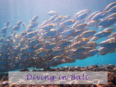 バリ島のおすすめダイビングスポット