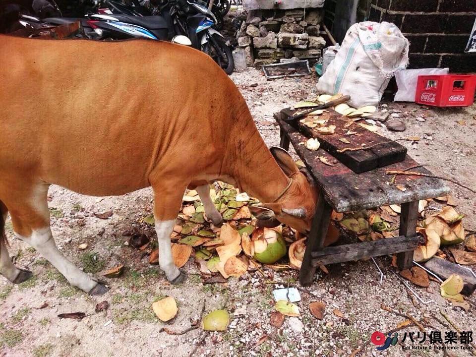 バリ島の動物