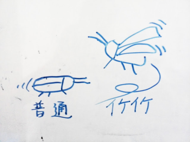 バリ島ゴキブリ遭遇率、特徴と種類