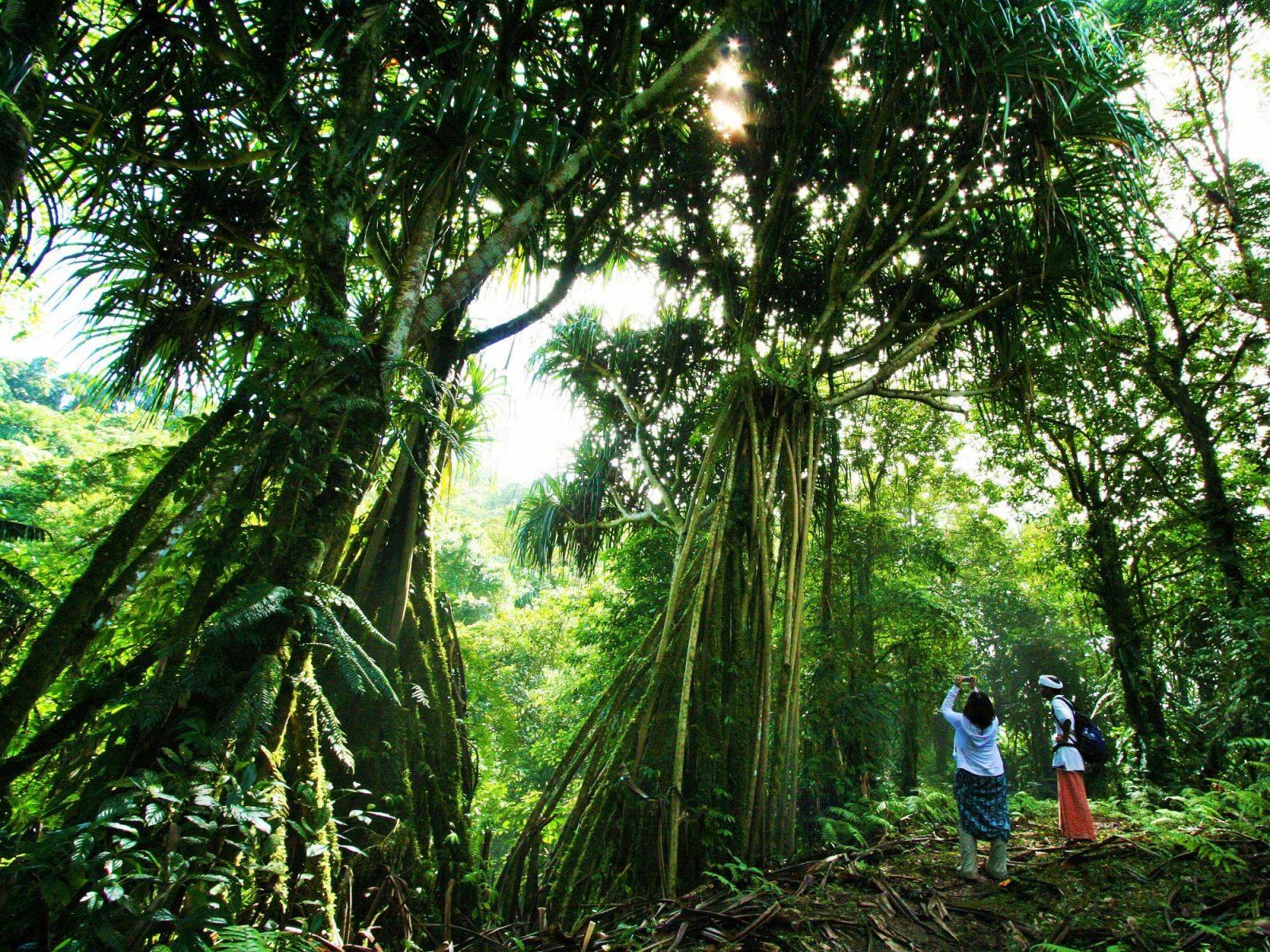 バリ島ランプヤン寺院、瞑想トレッキング