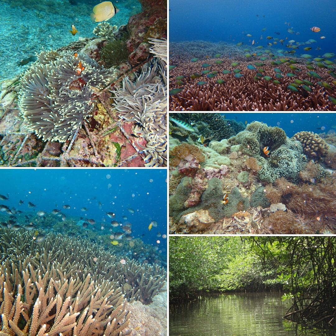 バリ島レンボンガン島のシュノーケリング写真