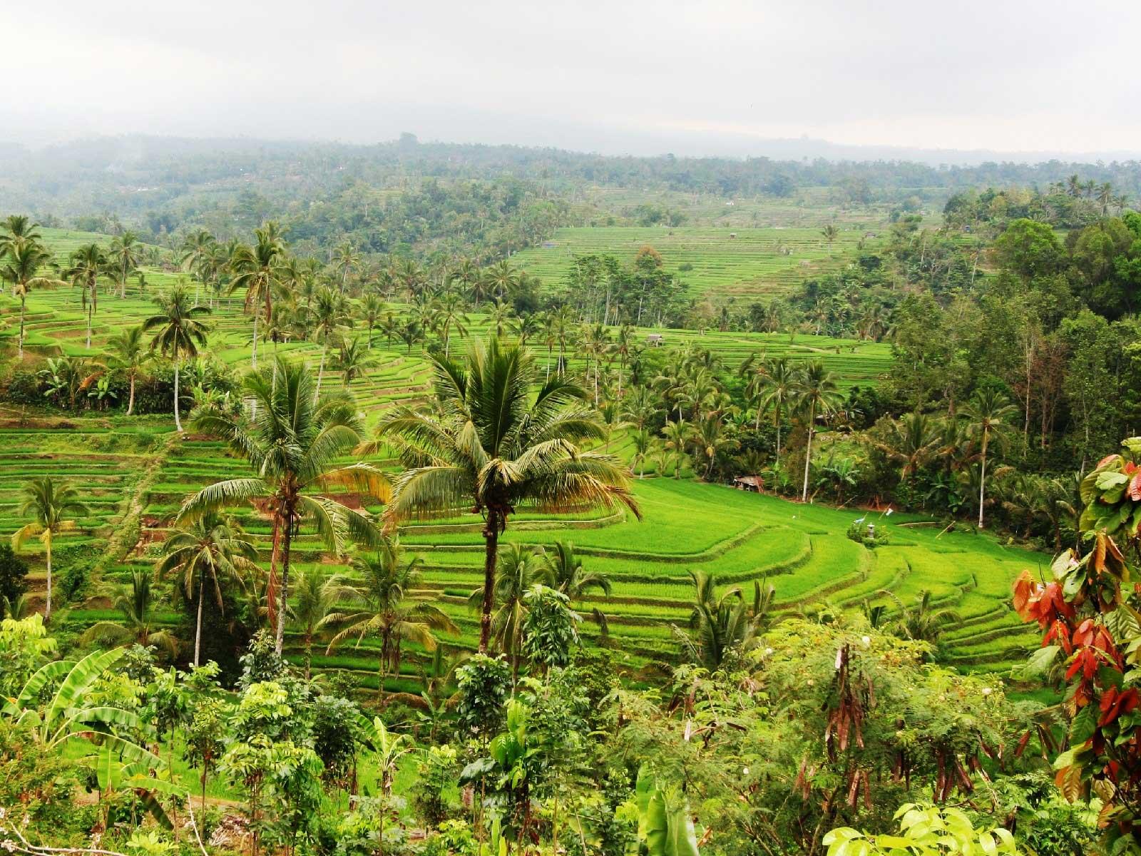 バリ島の世界遺産、ジャティルイ村ライステラス