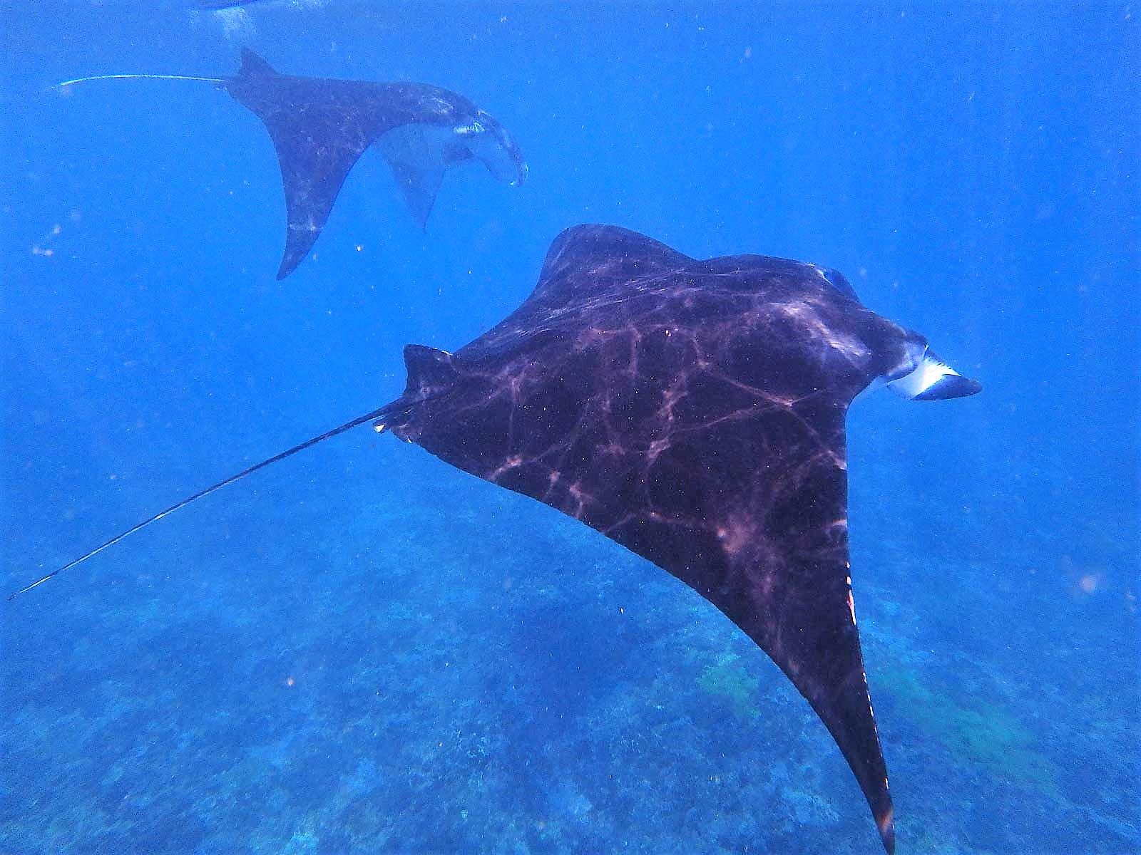 バリ島・レンボンガン島・ペニダ島素潜りシュノーケリング