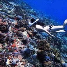 バリ島発レンボンガン島&ペニダ島シュノーケリング専門ツアー