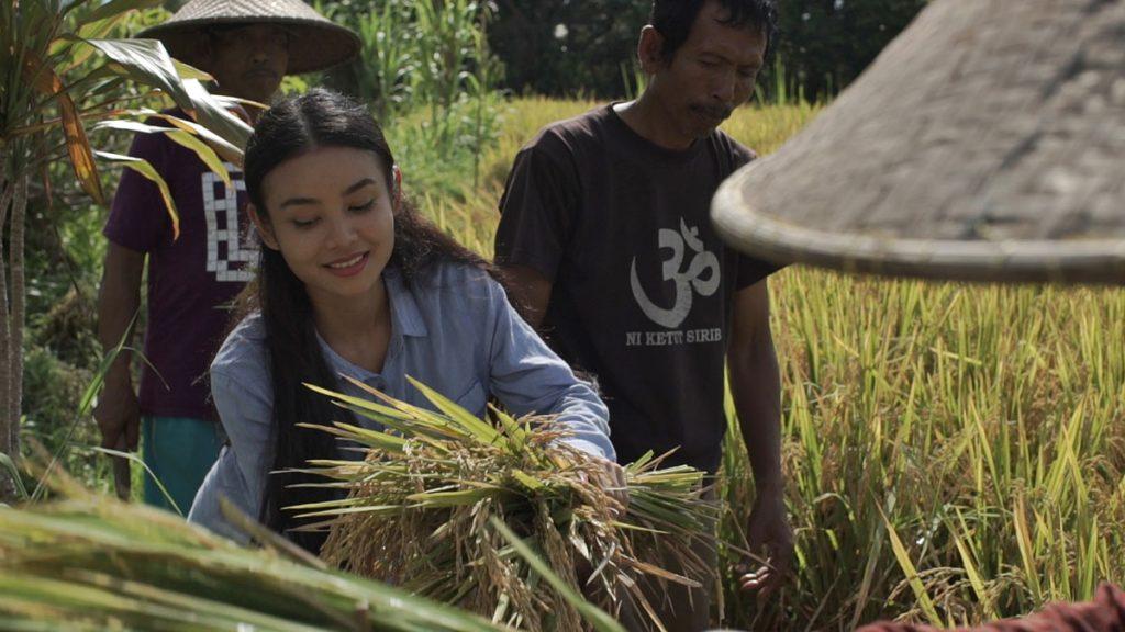 農家と稲狩り体験