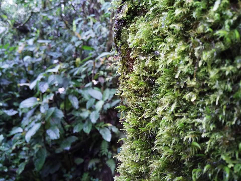 スマトラの熱帯林