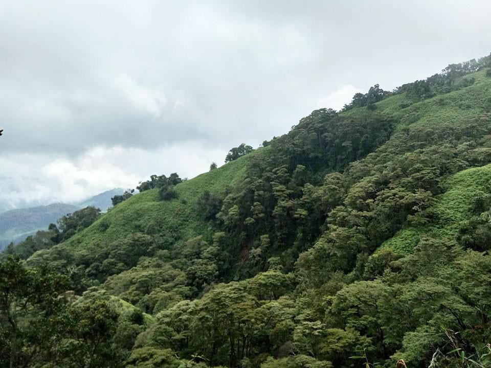 クリンチ山の熱帯林