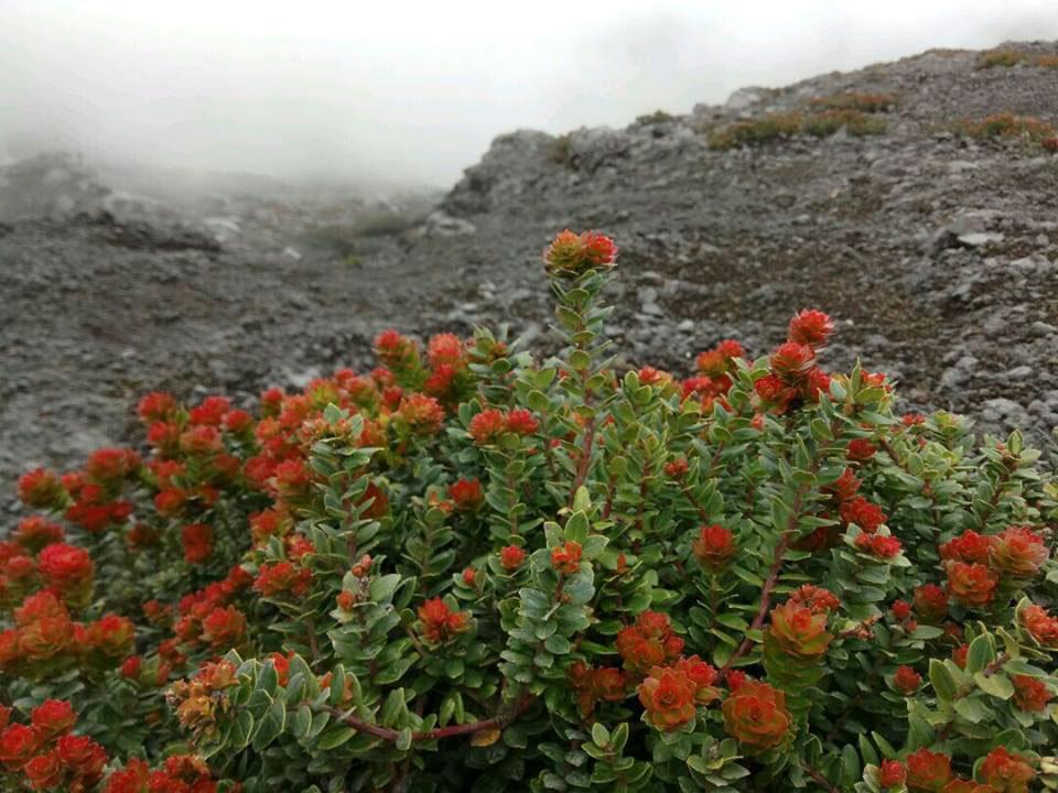 クリンチ山の植物