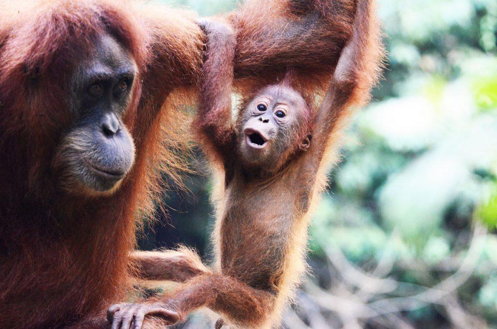 インドネシアの動物