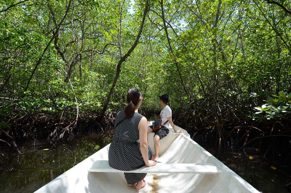 mangrovrtour