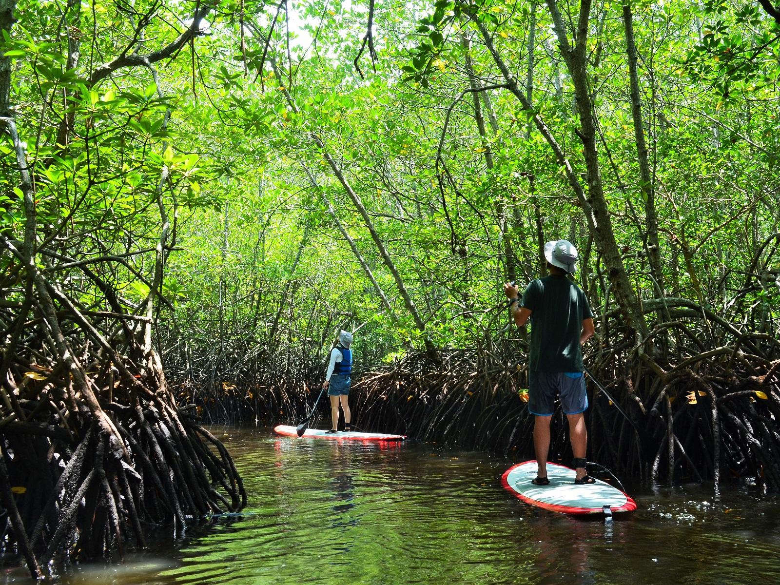 mangrove-forest-lembongan