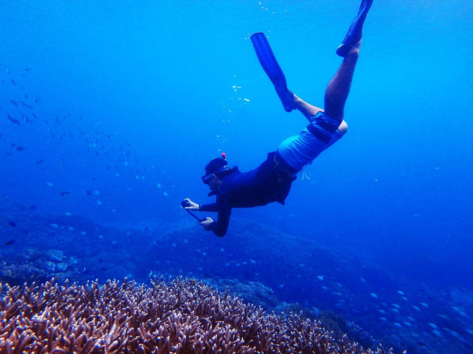 mangrove03