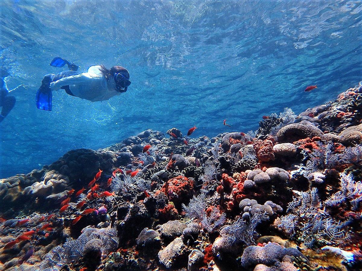 バリ島・ペニダ島ドリフトシュノーケル&絶景スポット巡り