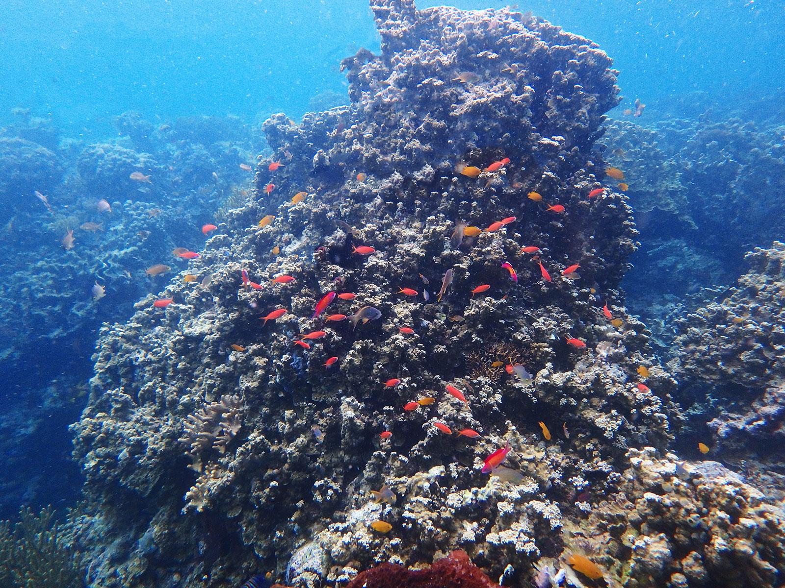 熱帯魚の群れ