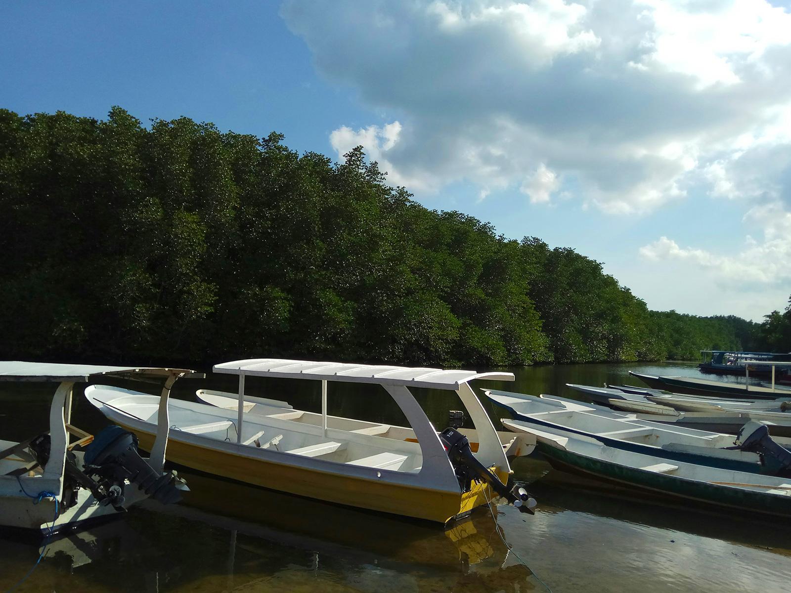 lembongan-mangrove-cruise