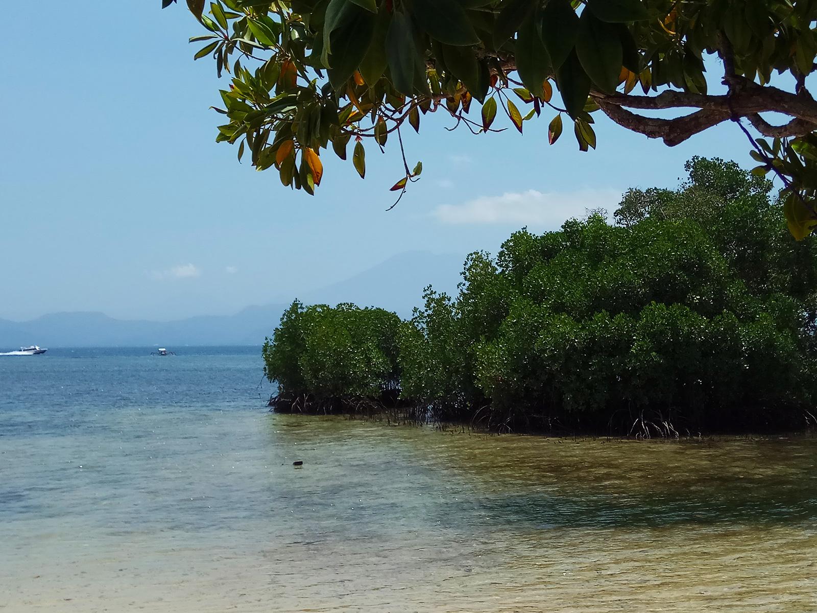 lembongan-mangrove-forest