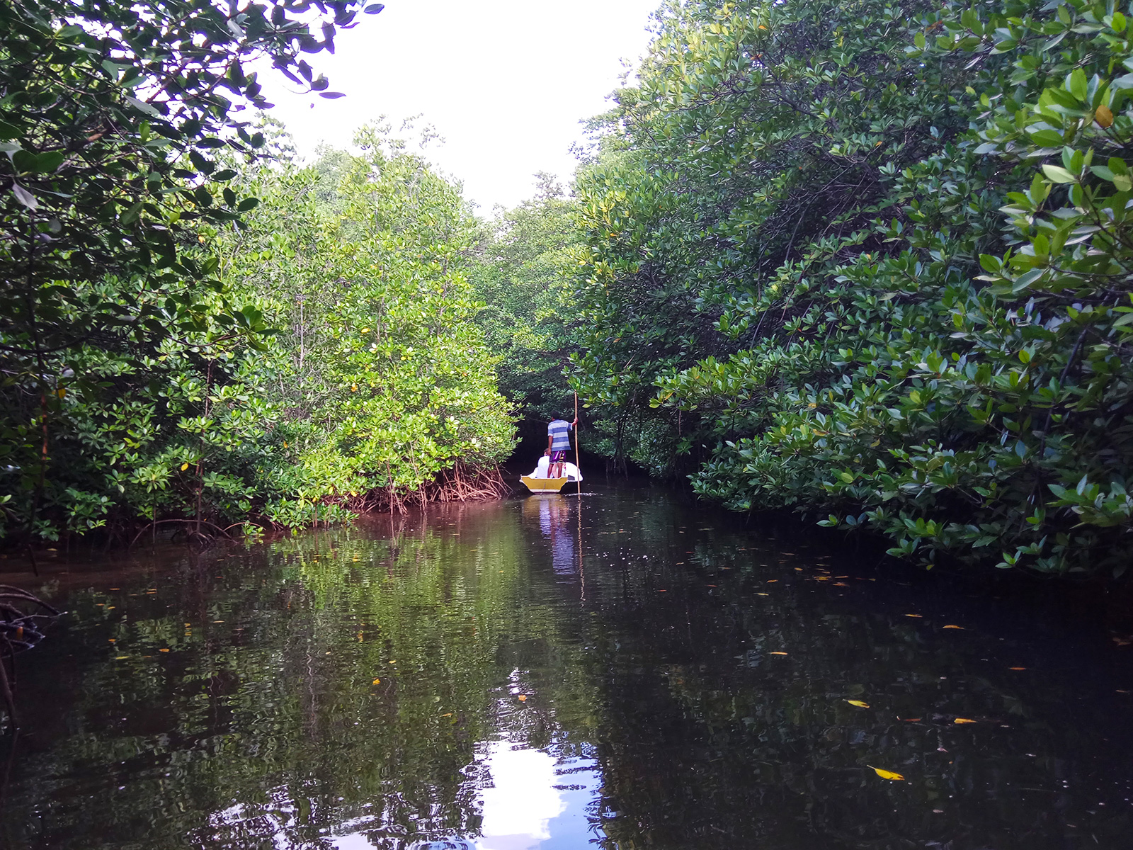 lembongan-mangrove-cruise2