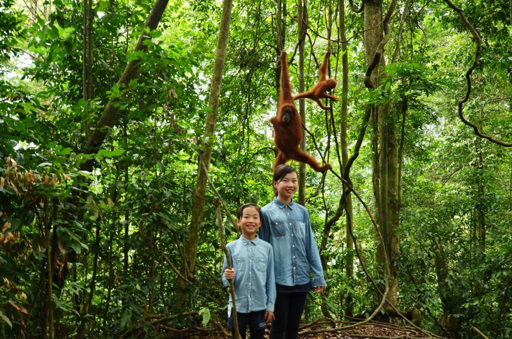 ojiexplorer-sumatera-orangutan3
