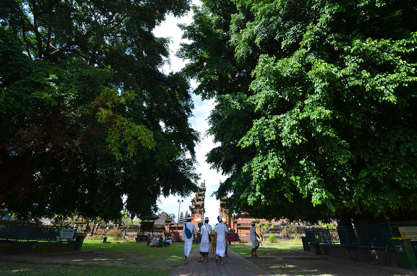 benjamin-tree-bali