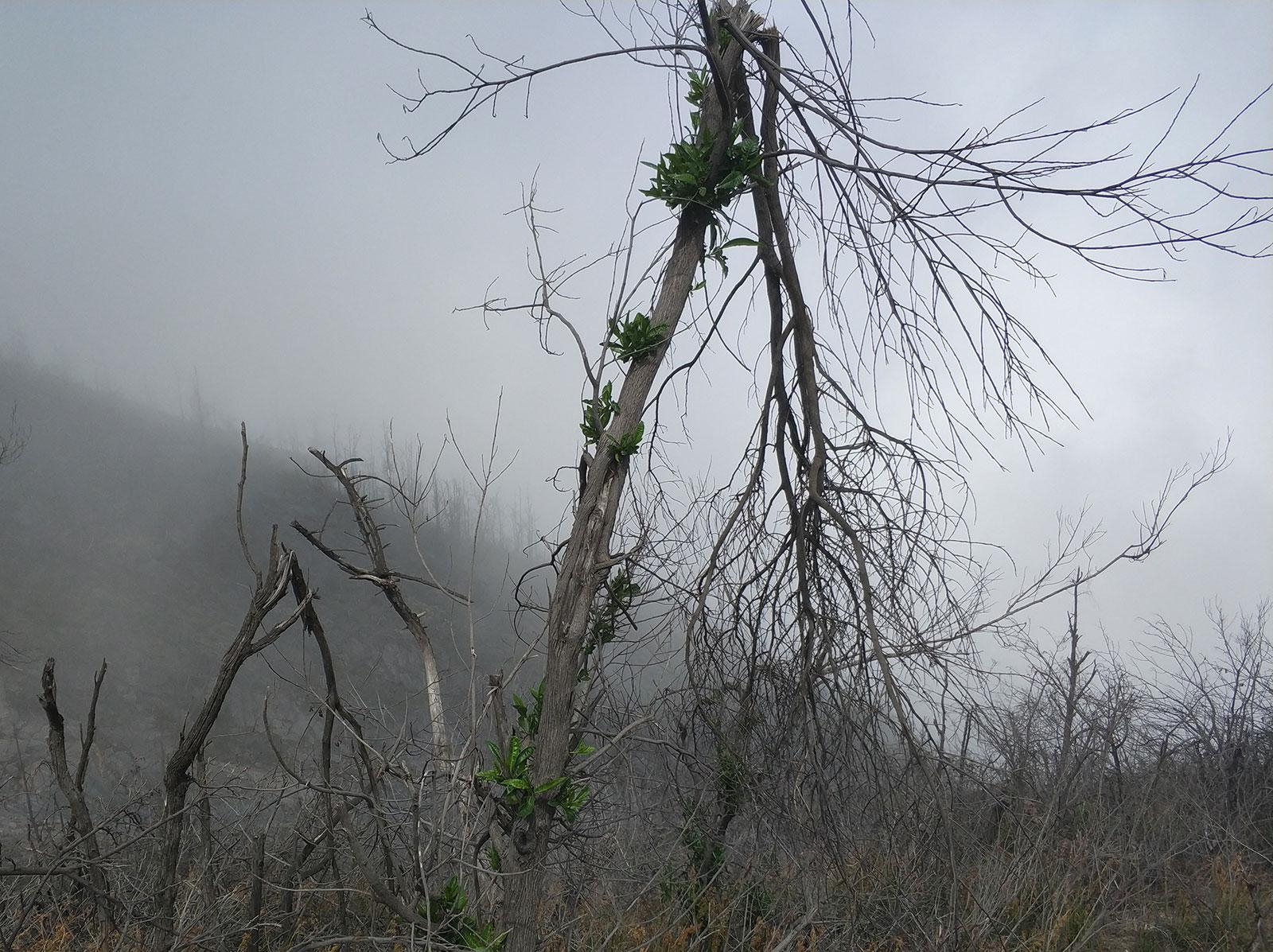 mount-agung-tree3