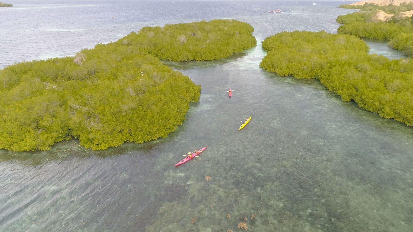explore-komodo-mangrove1