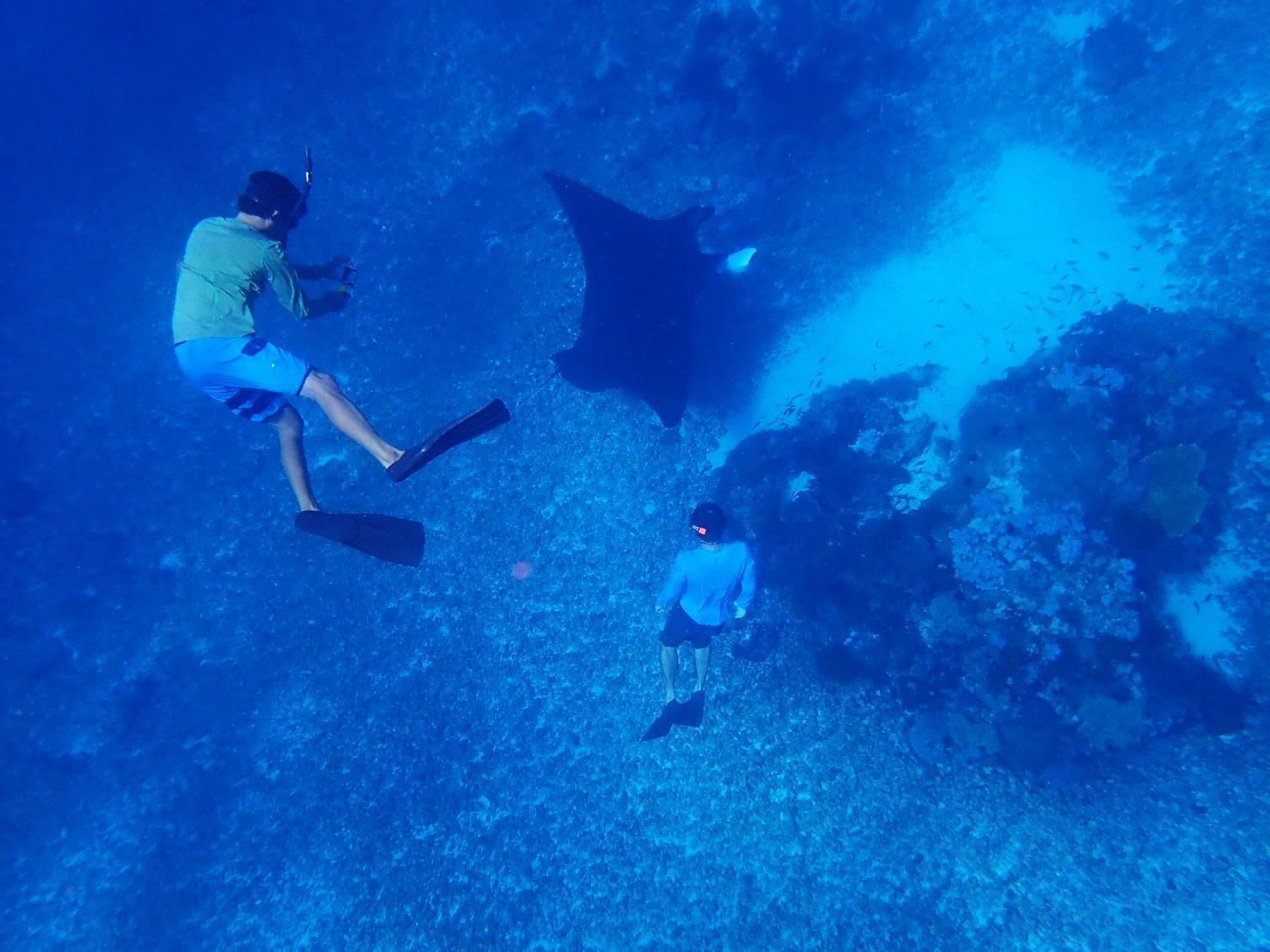 komodo-snorkeling-manta