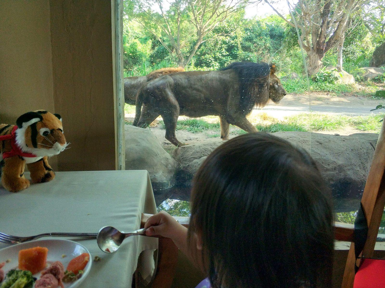 balisafari-breakfast-lion