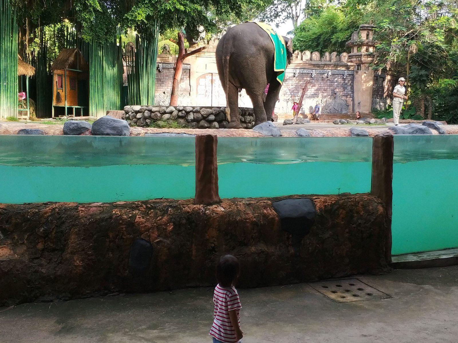 balisafari-elephant-show