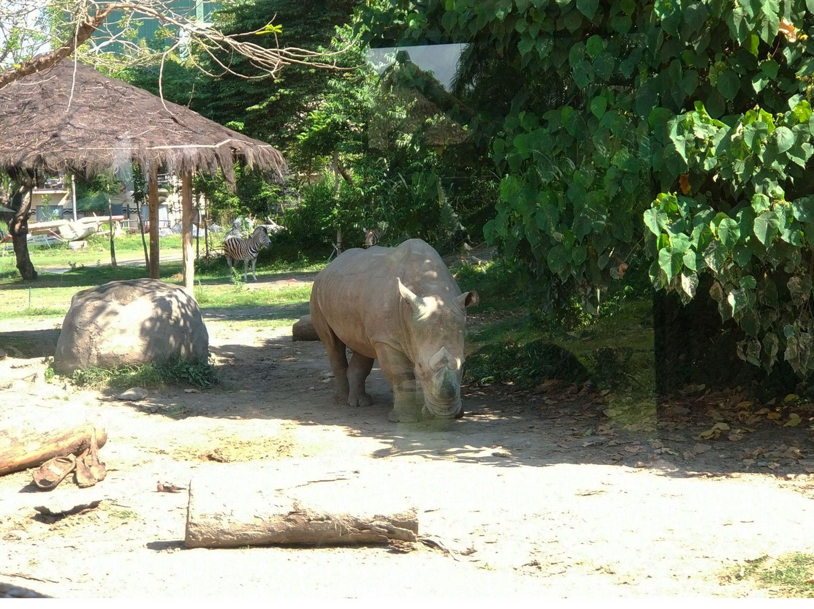 balisafari-rhino