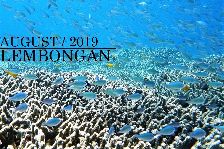 バリ島旅行夏休み家族向けツアー