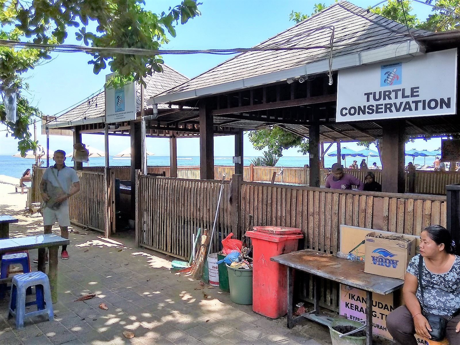 バリ島サヌール散歩ウミガメの種類