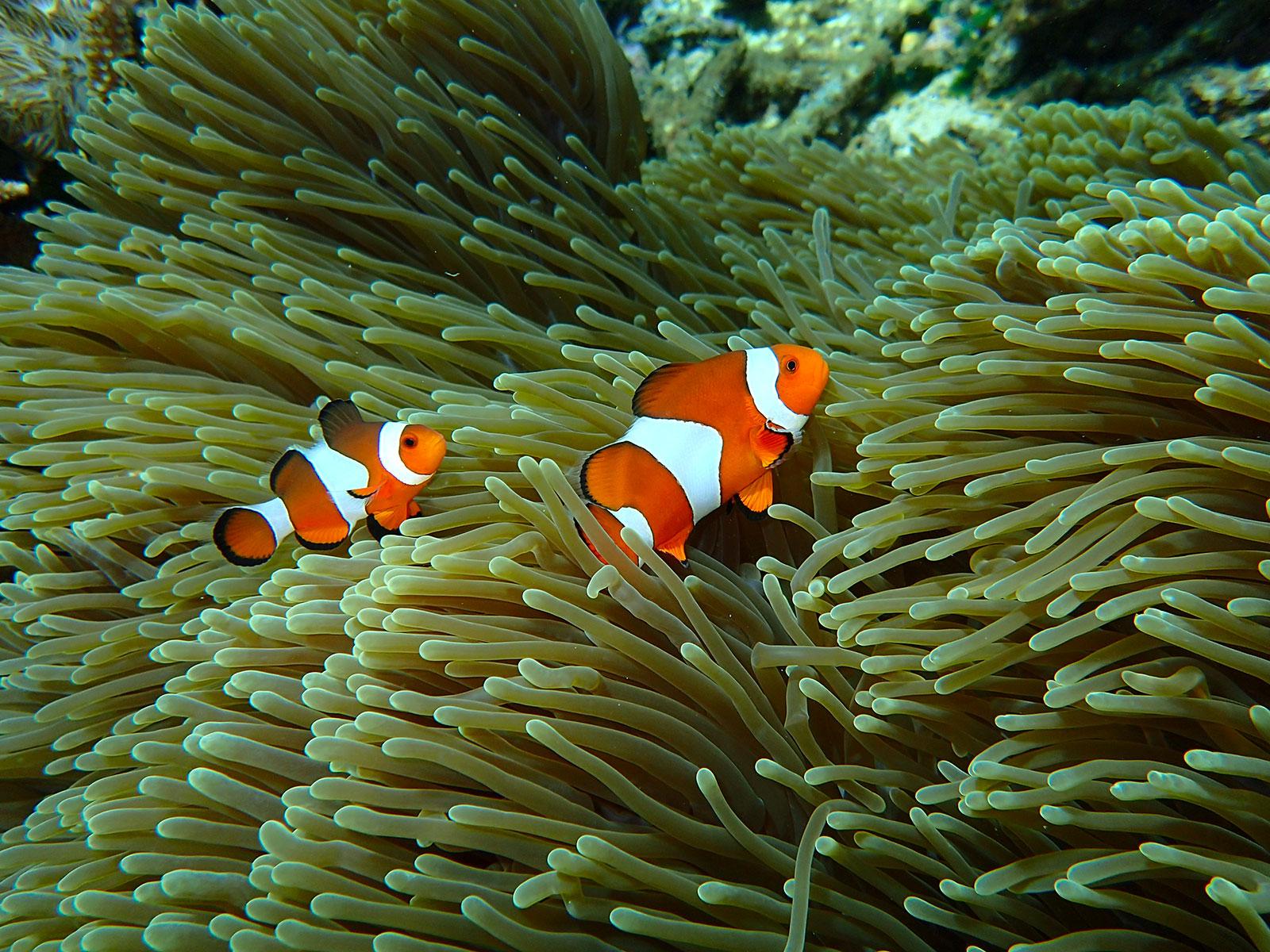 snorkeling-baliclub-nemo