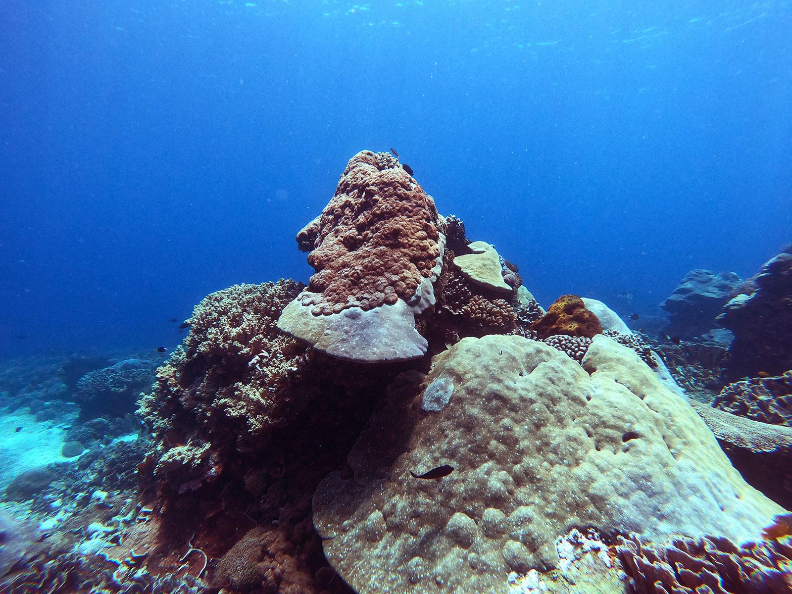 big-coral-penida