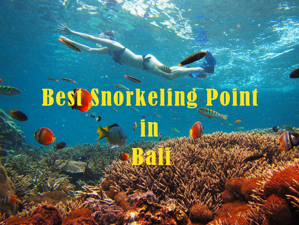 バリ島で綺麗なシュノーケリングポイント紹介