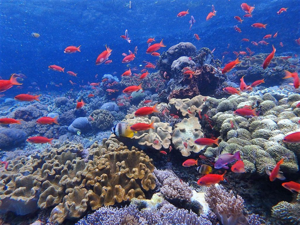 coral-fishes-penida
