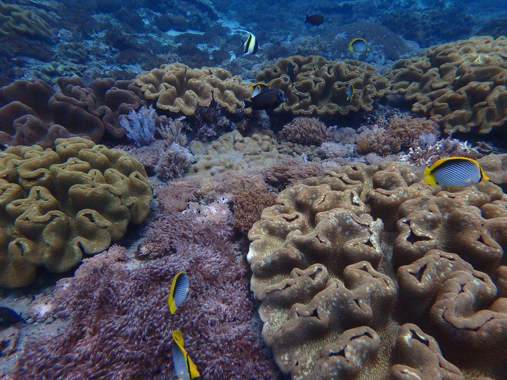 coral-penida-crystalbay