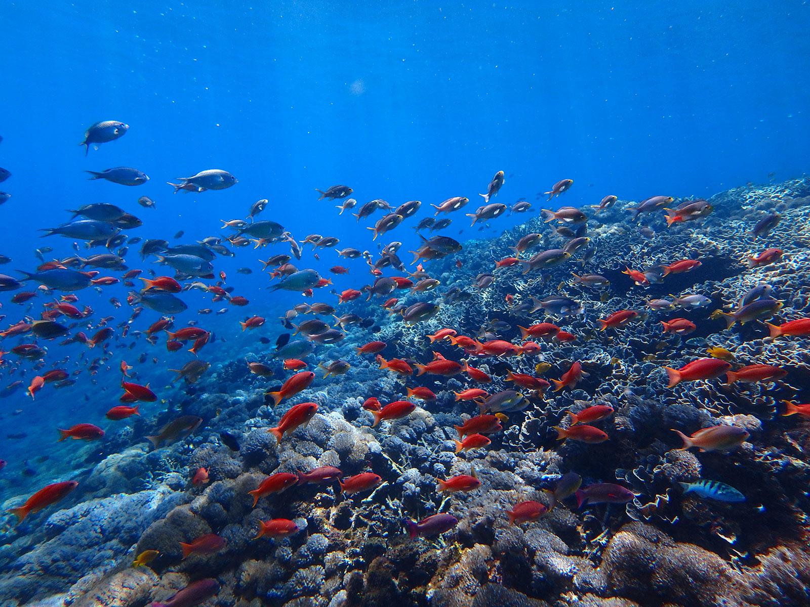 ペニダ島のサンゴ礁と熱帯魚