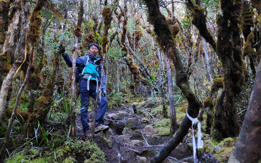 latimojong-forest