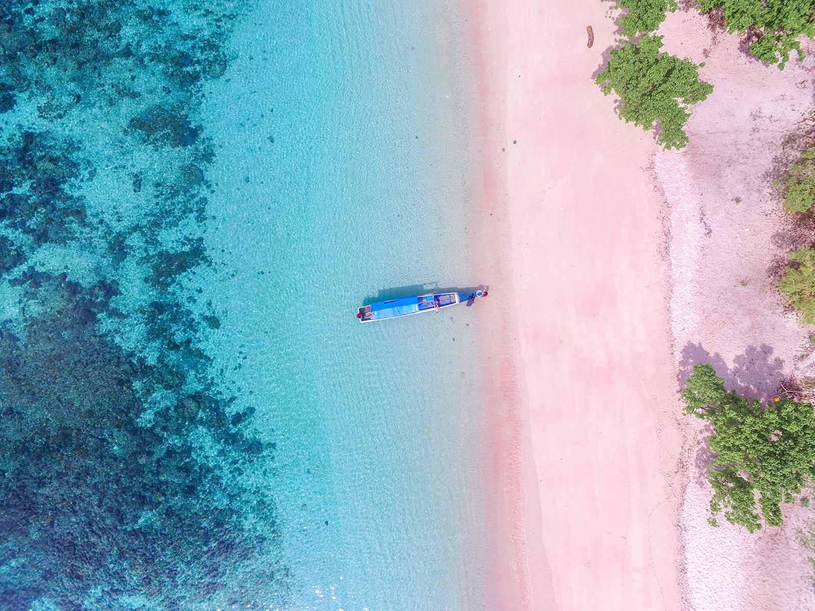 コモド島のピンクビーチ